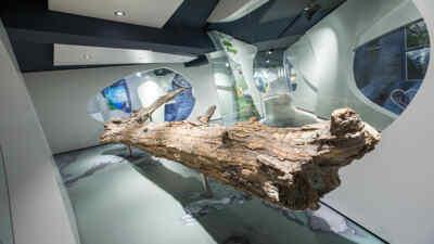6.000 Jahre im Eis im Bereich der Pasterze - der Gletscherbaum